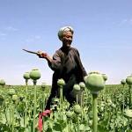 Narco-economics: future Afghan economy?
