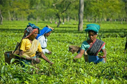 teagarden