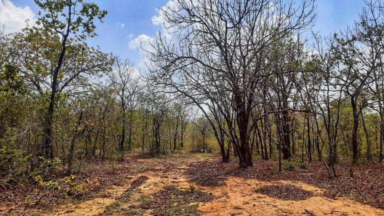 buxwaha-forest-768x432