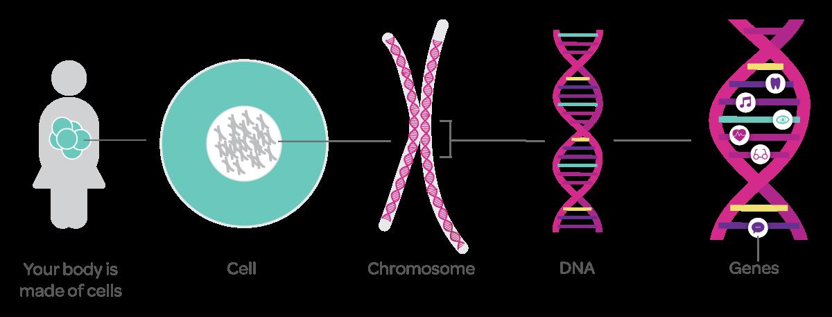 genetics-101